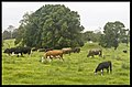 Green Pastures-02and (3150460590).jpg