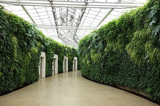 Green wall - Longwood Gardens - DSC01041
