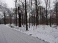 Großer Garten, Dresden in winter (1066).jpg