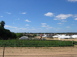 Gwelup, Western Australia - A market garden on North Beach Road, surrounded by residential development