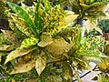 HK Mid-levels High Street clubhouse green leaves plant February 2019 SSG 09.jpg