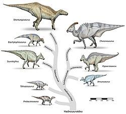 Ornithischia Wikipedia La Enciclopedia Libre Los ornitisquios se caracterizaron por contar con cuernos, crestas y muchos dientes, como arma para protegerse de los. ornithischia wikipedia la