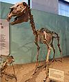 Hagerman horse.jpg