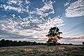 Haltern am See, Westruper Heide -- 2015 -- 7990-2.jpg