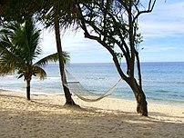 A w:Hammock on a tropical beach.