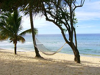 A Hammock on a tropical beach.