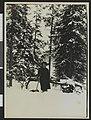 Hanna Resvoll-Holmsen på skitur i skogen i Oslos omegn - no-nb digifoto 20160211 00501 bldsa GH01 00069.jpg