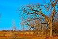 Hanover Township, IL, USA - panoramio (6).jpg