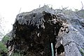 Hato Caves, Curaçao (4388981954).jpg