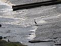 Heron in the weir - geograph.org.uk - 809503.jpg