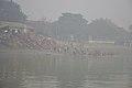 Hindu Devotees Taking Holy Dip In Ganga - Makar Sankranti Observance - Babu Ghat - Kolkata 2018-01-14 6923.JPG