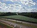Holambra - Plantações vista do Moinho Holandês (clique na foto) - panoramio.jpg