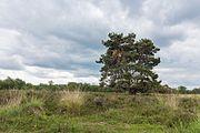 Hondsrug, De Strubben-Kniphorstbosch 18.jpg