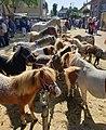 Horse Days of Bemmel.jpg