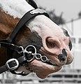 Horse Play (9510390502).jpg