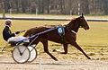 Horse Races 001 (8605821441).jpg