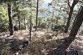 Horteri Nature Trail - panoramio (11).jpg