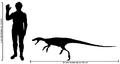 Human-staurikosaurus size comparison2.png