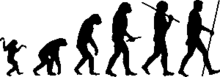 Human evolution scheme.png