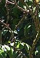 Hummingbird (2719238145).jpg