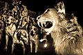 Hunting Dogs.jpg