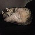 Husky Pile.jpg
