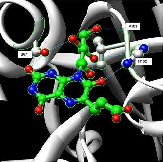 Riboflavin synthase - Image: Hydrogen Bonding N Terminal Domain