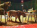 Il circo wegliams - panoramio.jpg