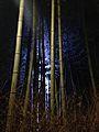 Illuminated Sagano bamboo forest 5.jpg