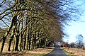 In winter driving by car along these beeches is real fun at Hoge Veluwe - panoramio.jpg