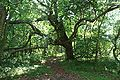 Indian Mound Park 06May2010 04.JPG