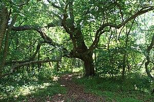 Dauphin Island, Alabama - Inside Shell Mound Park