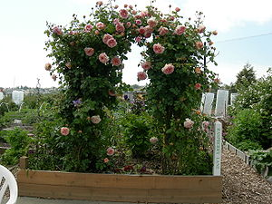 Trellis (architecture) - A trellis supports a climbing rose in a raised garden box
