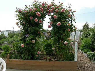 Trellis (architecture) - A trellis supports a climbing rose in a raised garden box