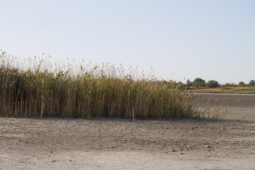 Isušeno korito jezera Rusanda 4