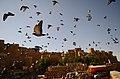 Jaisalmer (Rajastão), RTW 2012 (8404916677).jpg