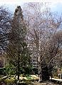 Jardín Botánico de Madrid en febrero (16655546902).jpg
