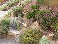 Jardin botanique - Planète pelargonium 3.jpg