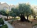 Jerusalem Garten Gethsemane Garden of Gethsemane (34936848792).jpg