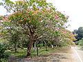 Jindai Plants Park 6.jpg
