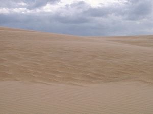 Jockey's Ridge State Park - A sand dune at Jockey's Ridge State Park