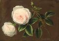 Johan Laurentz Jensen - Lyserøde roser.png