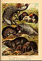 Johnson's household book of nature (Plate LIX) (7268700194).jpg
