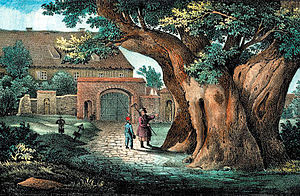 Lime tree in culture - Image: Kaditzer Linde, 1840