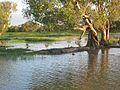Kakadu National Park (2052486790).jpg