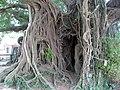 Kam Tin Tree House - 2007-09-30 13h58m58s SN200785.jpg