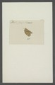 Kend - Print - Iconographia Zoologica - Special Collections University of Amsterdam - UBAINV0274 042 03 0029.tif