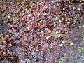 Kerstbos2012 018.JPG