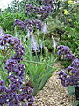 Kew Gardens - London - September 2008 (2955043897).jpg