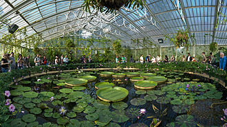 Biosequestration - Kew Gardens Waterlily House. David Iliff, 2008